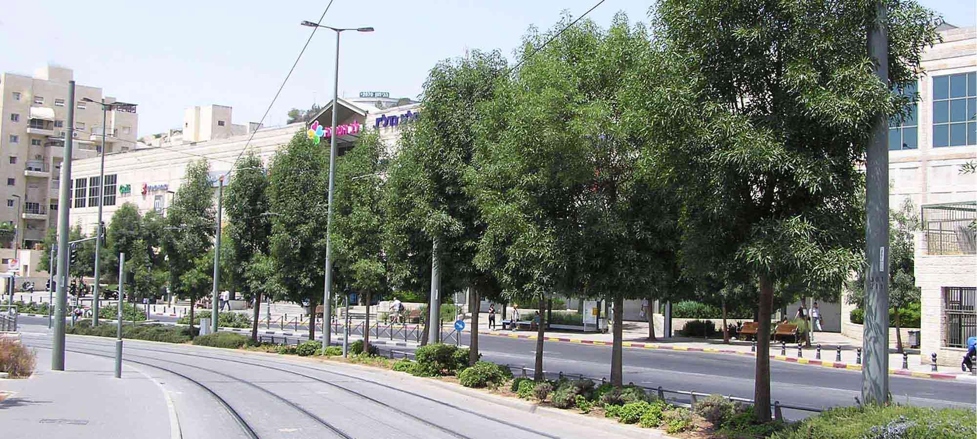 עצים נותני צל ועצי רחוב